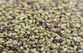 紫花苜蓿种子多少钱一斤,一亩地用