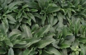 北方速生的饲草品种有哪些?