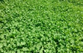 水份含量高的饲草品种都有哪些