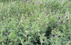喂养家兔的饲草品种都有哪些