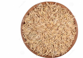 [燕麦]燕麦种子价格_种植方法