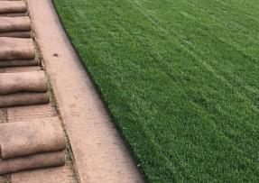 [四季青草坪]四季青草坪种子价格_图片_种植方法