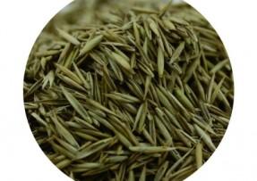 [紫羊茅]冷季型草坪种子紫羊茅价格_图片_种植方法