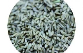 百慕大种子批发一斤多少钱,哪里的