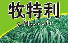 一年生黑麦草牧草品种—牧特利