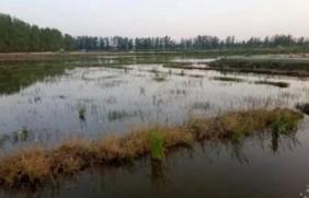 小米草种植方案需要哪几个步骤