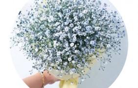 [霞草]霞草种子价格_图片_播种方法
