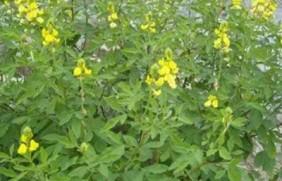 生态绿化种子有哪些,有什么需要注意