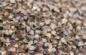 鲁梅克斯种子的种植方法,播种的技巧