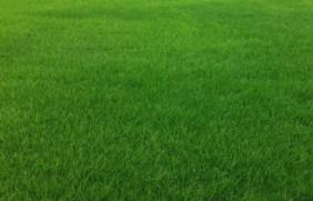 多年生黑麦草能生长几年?优点有哪些
